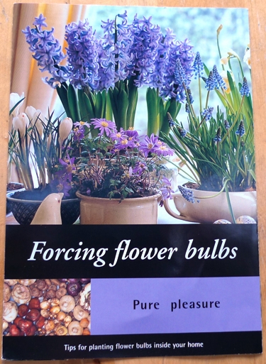 forcing flower bulbs