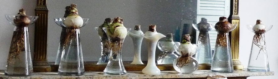 Welcome Hyacinth Vases
