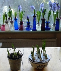 crocus pots and vases